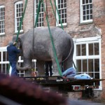 Elephant being moved into Mass MoCA
