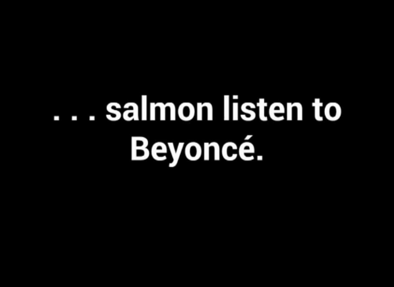 salmon listen to Beyonce