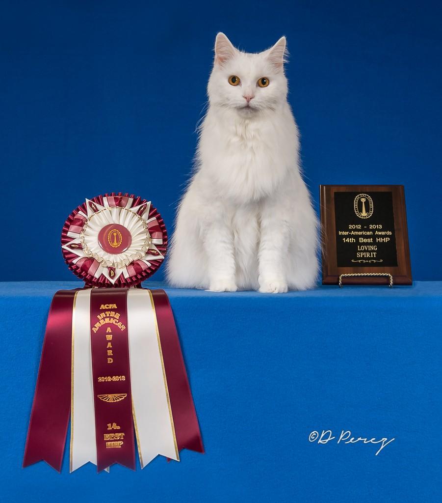 spirit with award