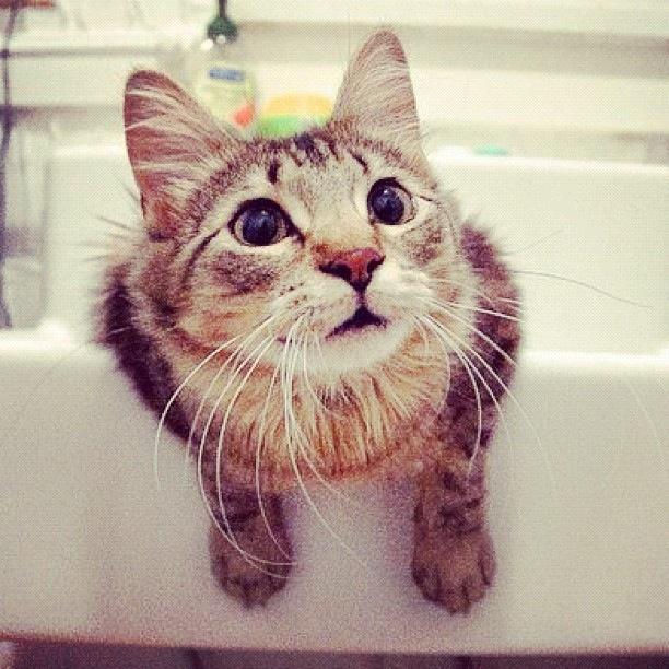 Curious_Cat