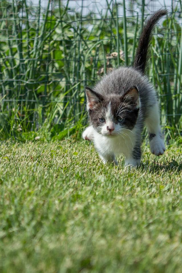 Running_Cat