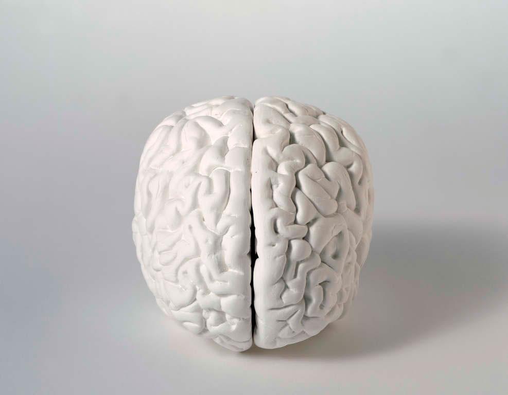 Katharina Fritsch, Gehirn (Brain). Plaster, paint. 1987/1989