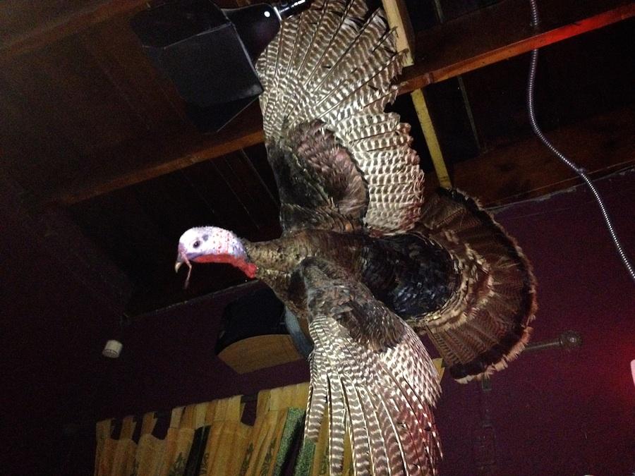 vulture_longhorn_900