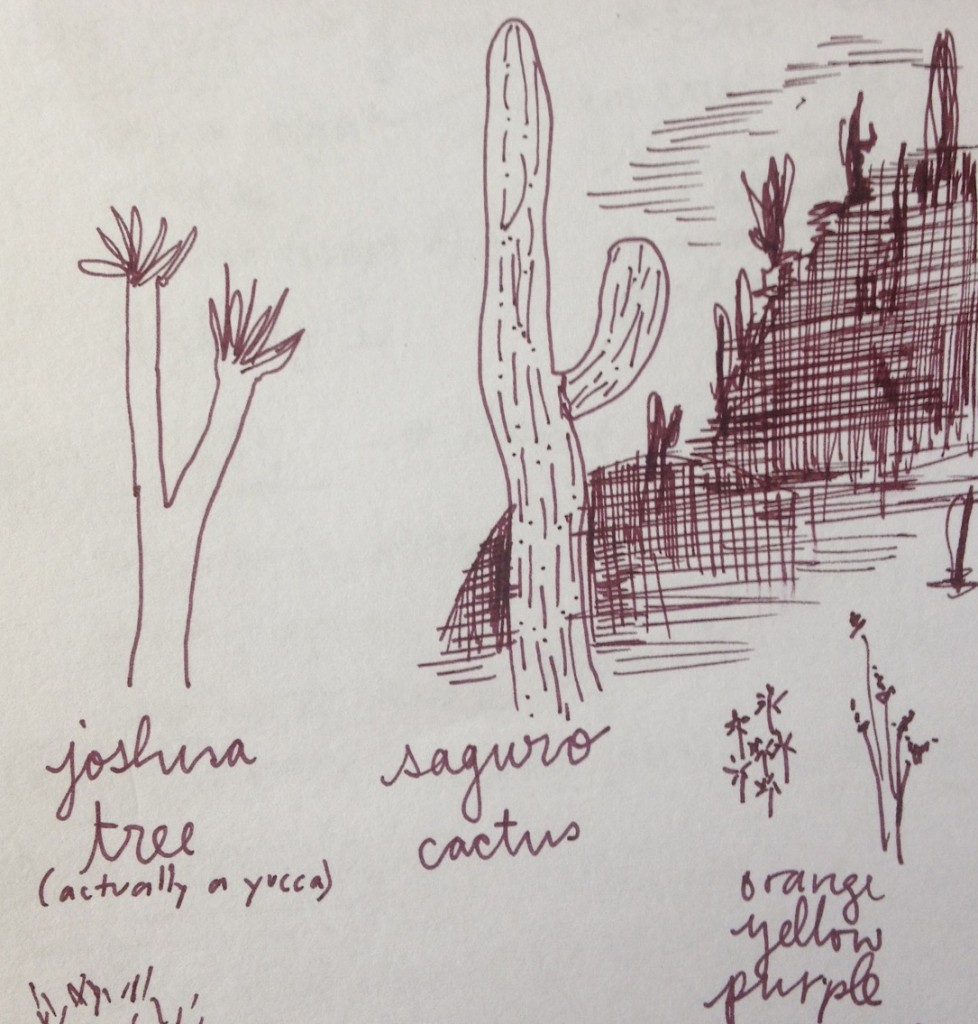 Illustration of several Southwestern plants by the author.