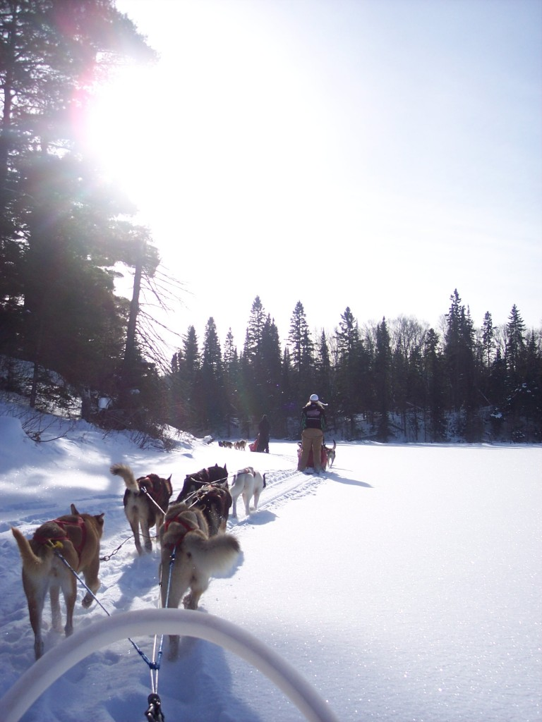 6 - Dogsledding![1]